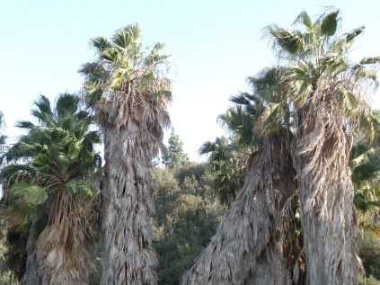 Palms, Rice Canyon, Chula Vista