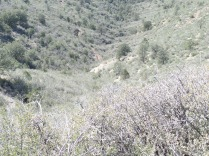 View of Government Canyon spur, from Badger Peak access road