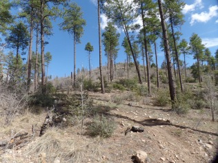 Sparse forest, north slope of Porter Mountain
