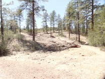 View of regrowth, in area affected by Doce Fire, Prescott